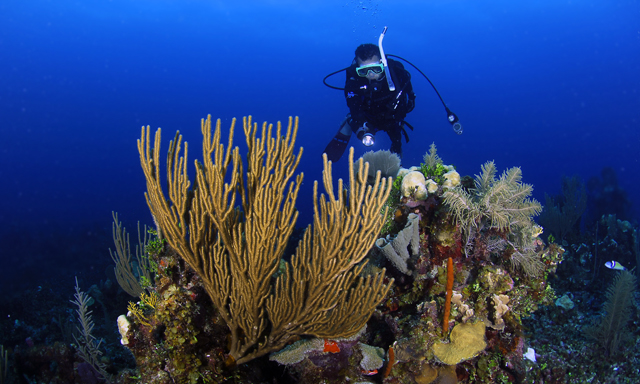 2-tank-turneffe-atoll-scuba-dive-without-equipment-BE12-mosaic